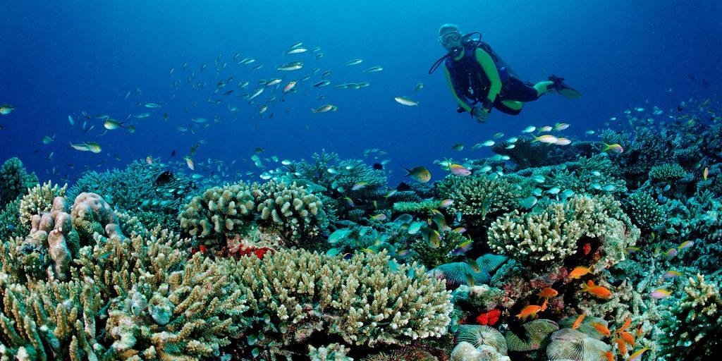 Biaya Aktivitas Liburan Di Pulau Maldives